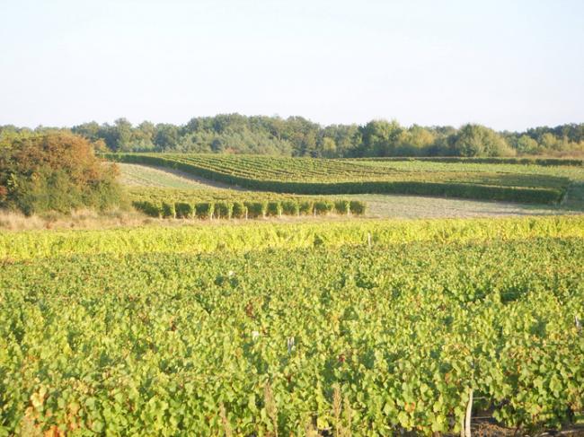 Domaine de la Renne-Credit-Domaine-de-la-Renne-Saint-Romain-sur-Cher-domaine-de-la-renne-fr-domaine-de-la-renne-haute-valeur-environnementale-fr-haute-valeur-environnementale